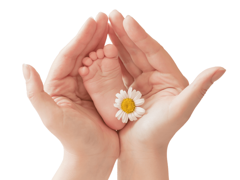 Mothers hands holding a baby's foot with a daisy to the right of the baby foot. Background is transparent (Taratata, Getty Images Pro)